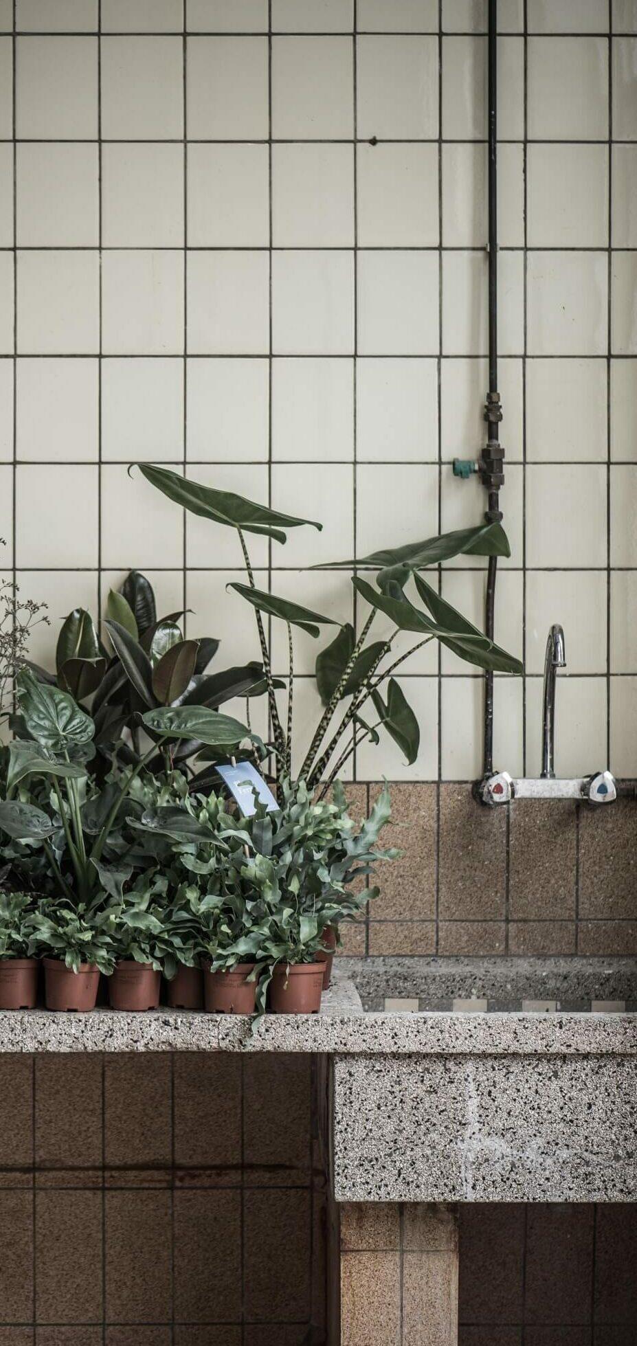 Skines planten bij waskbak